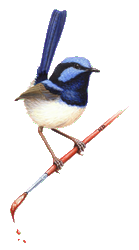 Blue wren on a paint brush